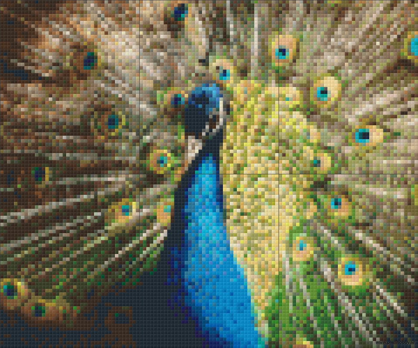 Påfågel3 6 rbp