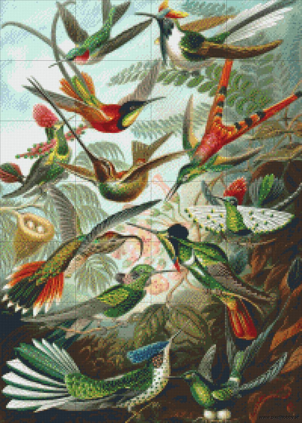 Kolibrier 28 rbp