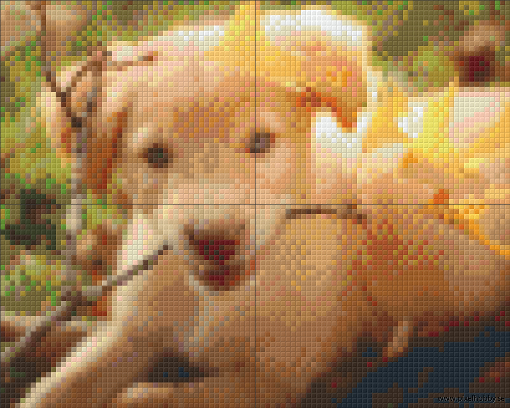 Labrador 4 rbp.phd