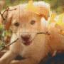 Labrador - Labrador - 6 rbp