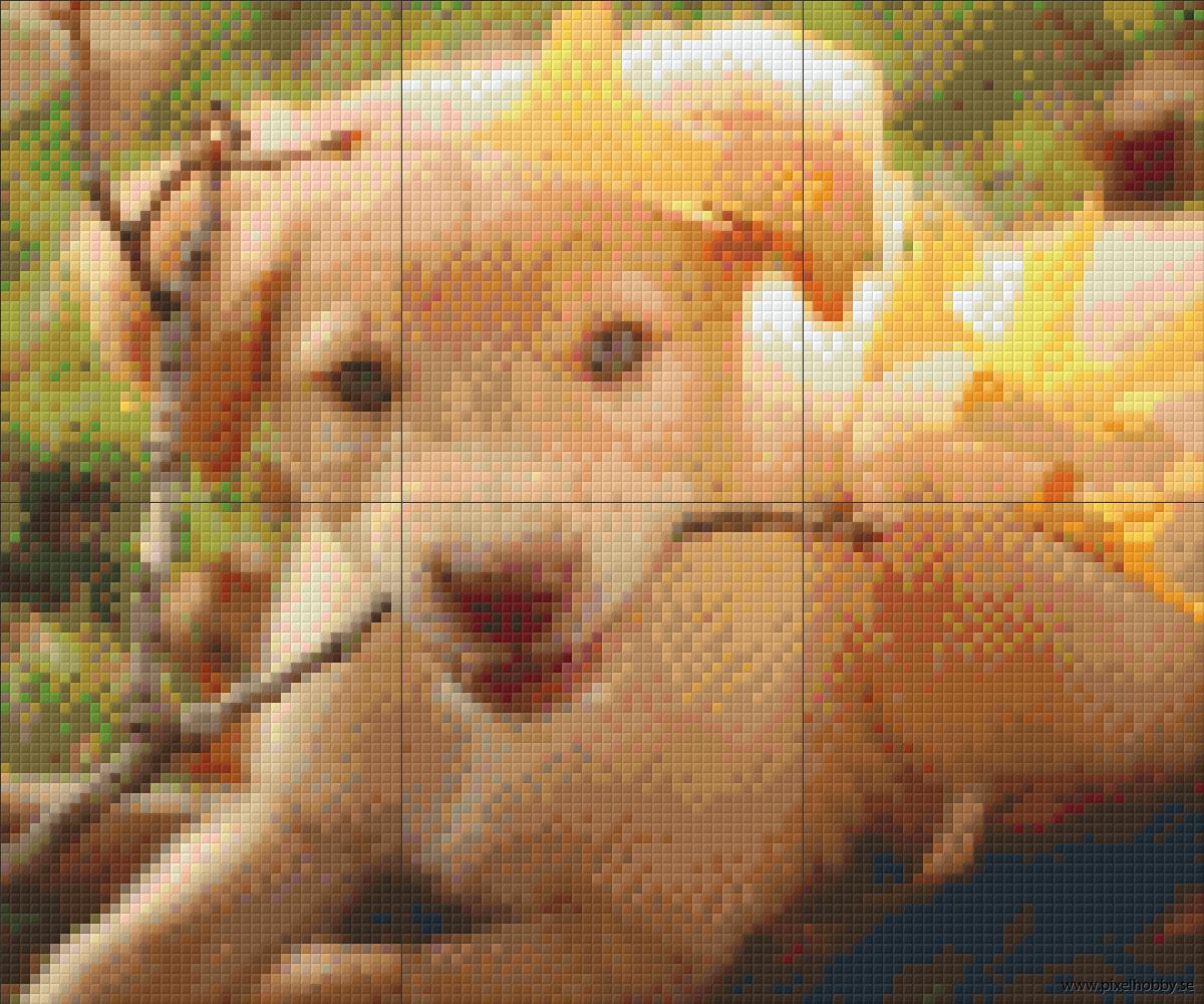 Labrador 6 rbp.phd