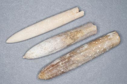 Belemniter. Krita, ca 70 miljoner år sedan (Möns klint, Danmark).