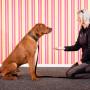Hundinstruktör-distansutbildning