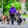 Hunddagisutbildning-distansutbildning - Hunddagisutbildning-distansutbildning