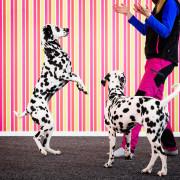 Hundinstruktör-intensiv