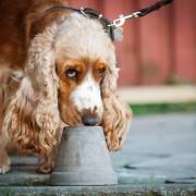 Nose work-instruktörsutbildning i samarbete med Dala hundservice