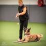 Beteendeutredare (Hundpsykolog)-distansutbildning