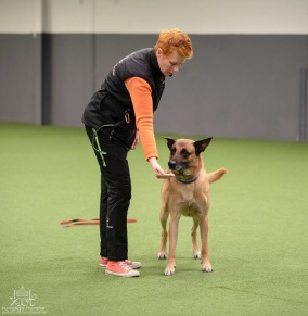 Beteendeutredare (Hundpsykolog)-distansutbildning - Beteendeutredare (Hundpsykolog)-distansutbildning