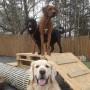 Hunddagisutbildning för Instruktörer - Hunddagisutbildning för Instruktörer