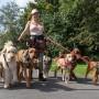 Hunddagisutbildning för Instruktörer