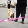 Hundutställningsinstruktör-distansutbildning