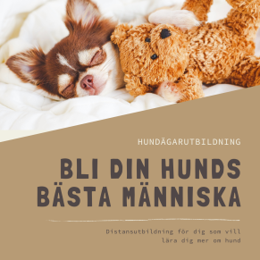 Hundägarutbildning-distansutbildning - Hundägarutbildning-distansutbildning