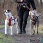 Hunddagisutbildning-distansutbildning