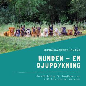Hunden – en djupdykning - Hunden - en djupdykning