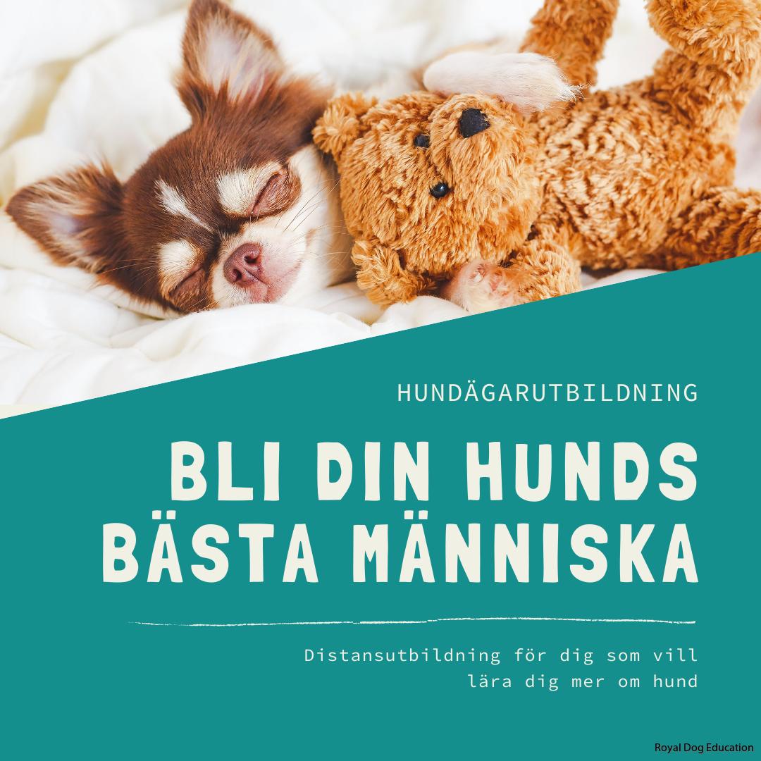 Bli din hunds bästa människa
