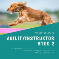 Agilityinstruktör Steg 2-distansutbildning