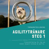 Agilitytränare Steg 1-distansutbildning