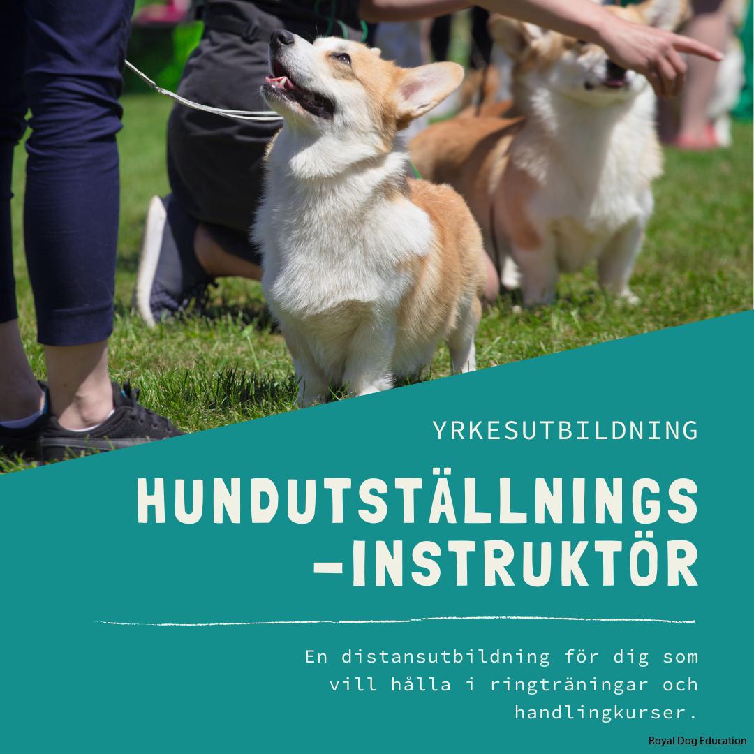 Hundutställningsinstruktör