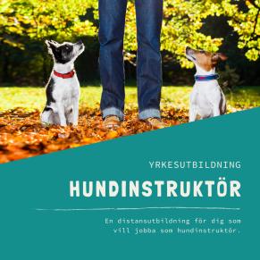 Hundinstruktör-distansutbildning - Hundinstruktör -distansutbildning