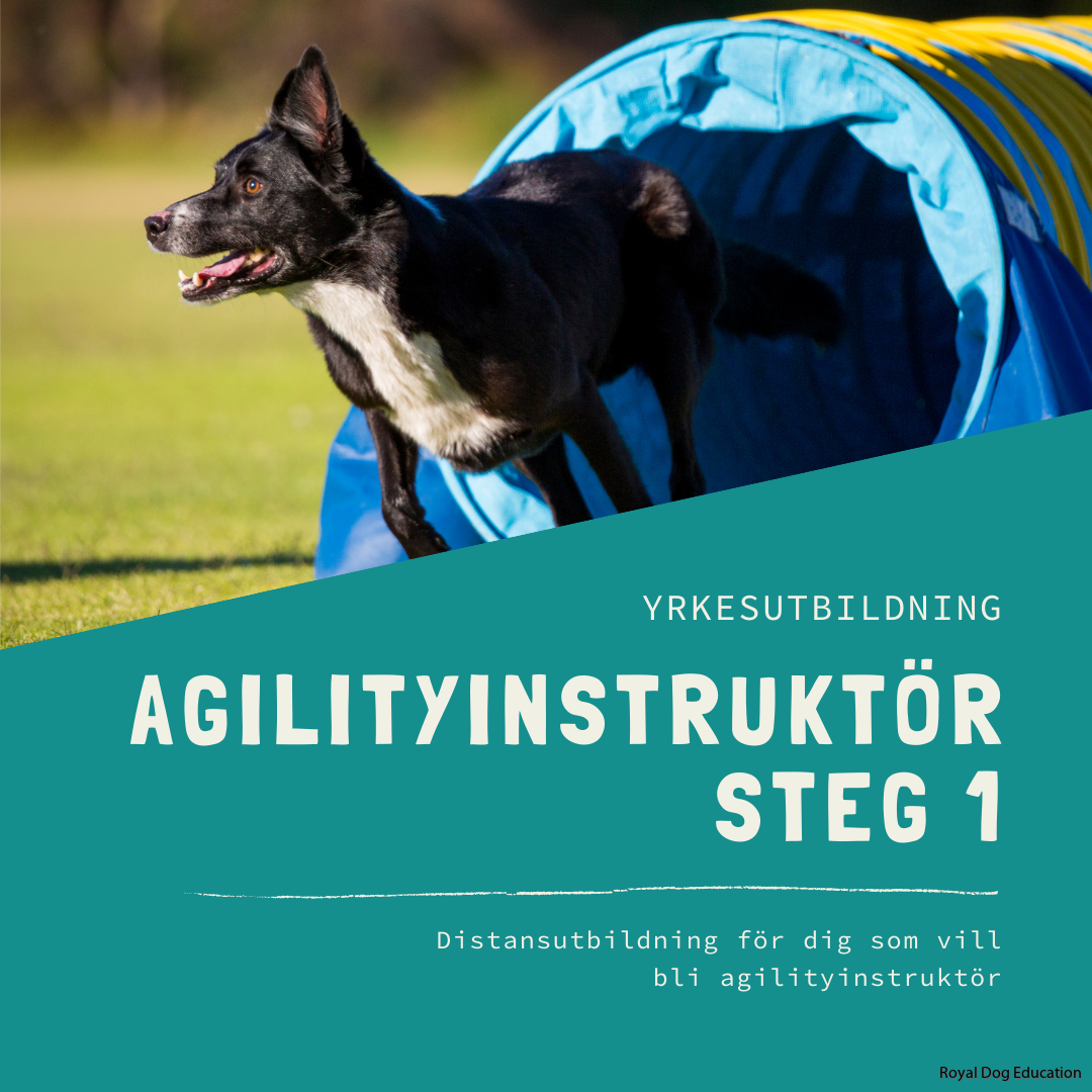 Agilityinstruktör steg 1