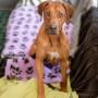 Hunddagisutbildning tillägg-distansutbildning