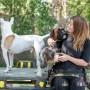 Hunddagisutbildning hundskötare-distansutbildning