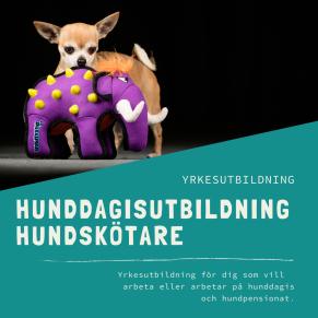 Hunddagisutbildning hundskötare-distansutbildning - Hunddagisutbildning hundskötare