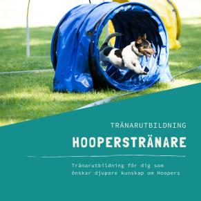 Hooperstränare-distansutbildning - Hooperstränare-distansutbildning