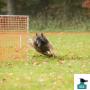 Hooperstränare-distansutbildning