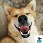 Hunden som kund-beteende och strategier