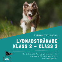 Lydnadstränare Klass 2-Klass 3-distansutbildning