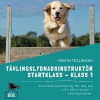 Tävlingslydnadsinstruktör Startklass - Klass 1-distansutbildning