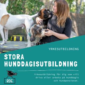 Hunddagisutbildning stora-distansutbildning - Stora hunddagisutbildning