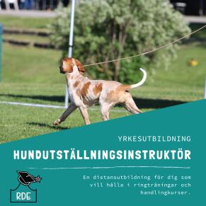 Hundutställningsinstruktör-distansutbildning - Hundutställningsinstruktör-distansutbildning