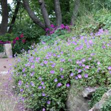 Rådgivning Trädgård, behöver du rådgivning idin trädgård för att komma vidare med trädgårdsdesignen i Varberg, Kungsbacka, Falkenberg, Halmstad