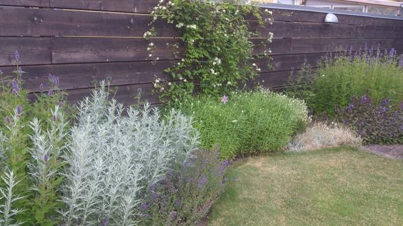 Kontakta oss på Känsla för trädgård i Varberg om du vill få hjälp med planetring av buskar, träd, häck eller andra växter i din trädgård.