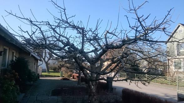 Hjälp med trädbeskärning i Varberg, Halland? Kontakta Känsla för trädgård i Varberg för hjälp att beskära & klippa träd, buskar & häckar i Kungsbacka, Falkenberg…