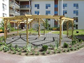 Pergolan är klar och växterna planterade. Nu är det vattning som gäller under resten av säsongen för att få växterna att komma igång ordentligt.