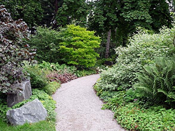 Friväxande buskar får behålla sin naturliga form. Här är det inte blommor som är i fokus utan kombinationen av olika bladfärger och former. Enkelt och vilsamt för ögat.
