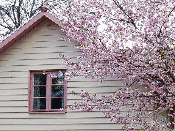 Härligt val av kulör på huset. Färgmatchat efter körsbärsträdets blommor.