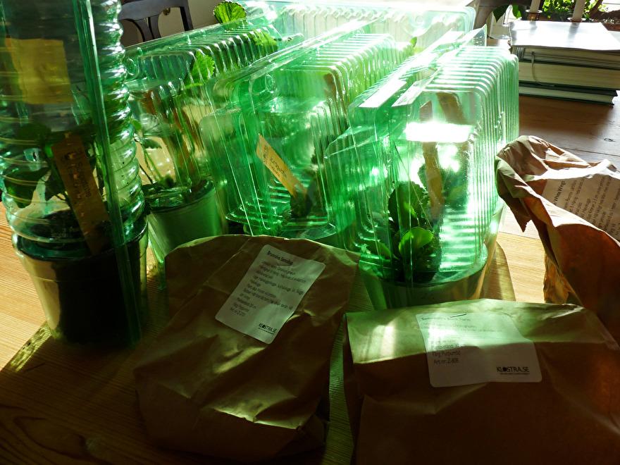 Det kändes verkligen som julafton att öppna paketet som innehöll plantor av gurka, tomat, sötpotatis och jordgubbar samt perennrötter i de bruna påsarna.