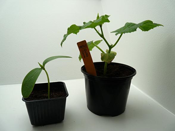 köpa plantor på nätet