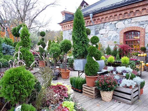 Formklippta vintergröna växter som väntar på att förgylla någons trädgård