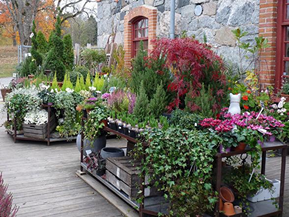 Fint arrangerade höstväxter bildar inbjudande stilleben  med härliga färg- och formkombinationer