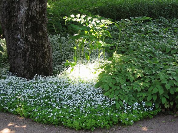 Plantera skuggtåliga växter istället för gräsmatta i skuggan och få en vacker, frodigt grön plats som blir en tillgång i trädgården.