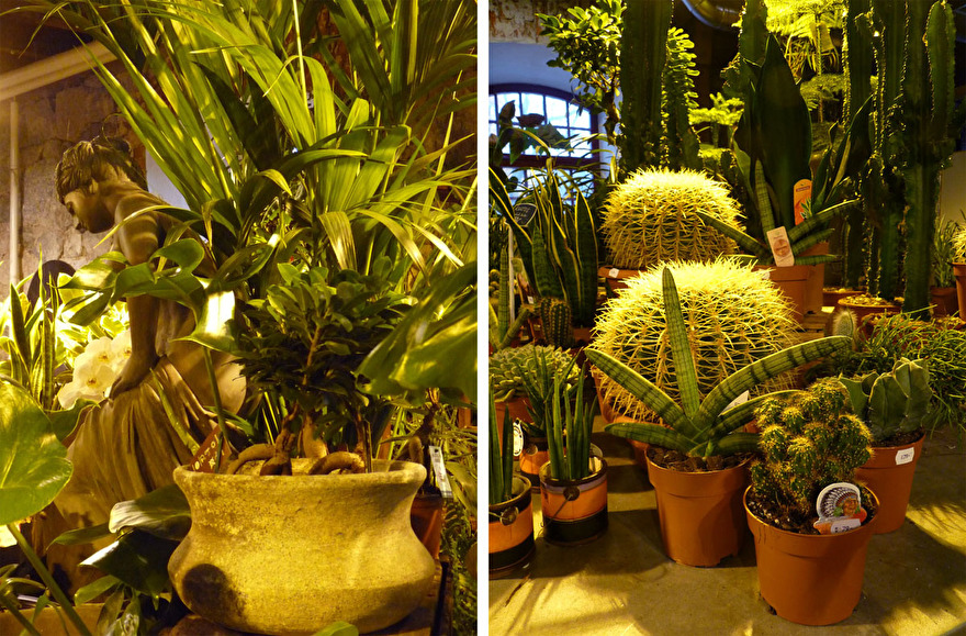 Palmer och kaktusar inne i trädgårdsbutiken