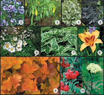Färgschema för växterna i toner som matchar husets nyanser