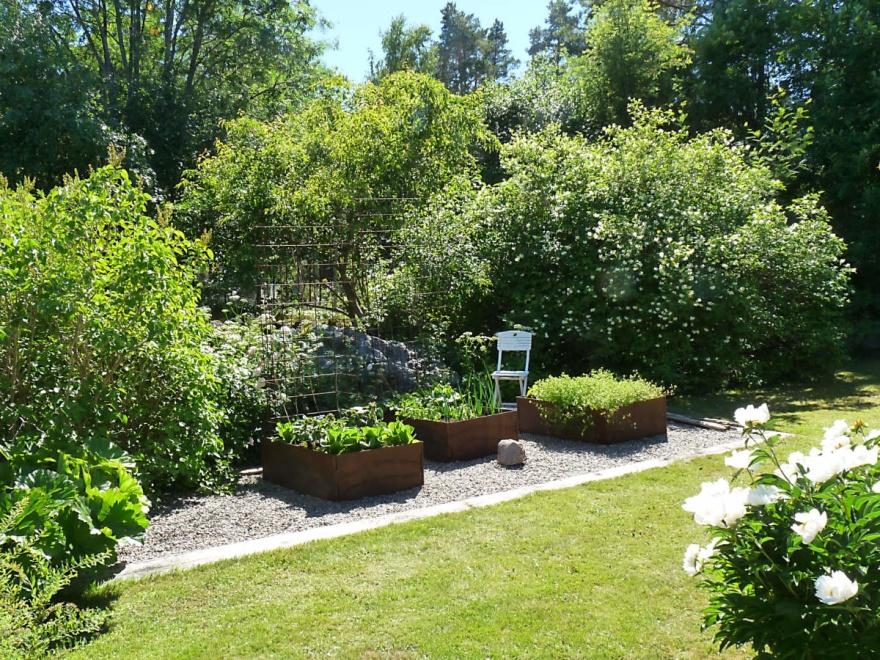 Ett exempel på en mindre odling som smälter ihop med trädgården på ett tilltalande sätt. Med stora, friväxande buskar, odlingslådor i cortenstål och en grusad yta som tydligt avgränsas mot gräsmattan blir det ett lättskött och vackert odlingsrum. Lägg också märke till den stora rabarberplantan till vänster i bild.