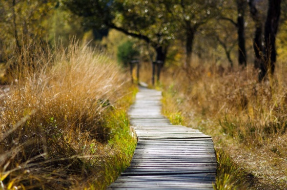 Hur ser vägen till din drömträdgård ut? Lätt och rak eller  krokig och kantad av hinder?