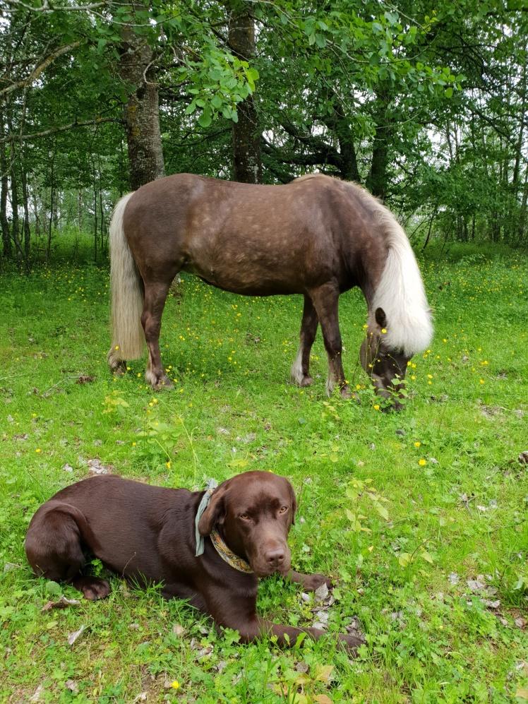 Klart mattes nya häst skall vara brun!